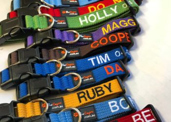 Review – Another reason why Personalised Collars are good